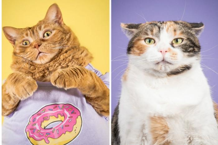 Причина похудения кошки