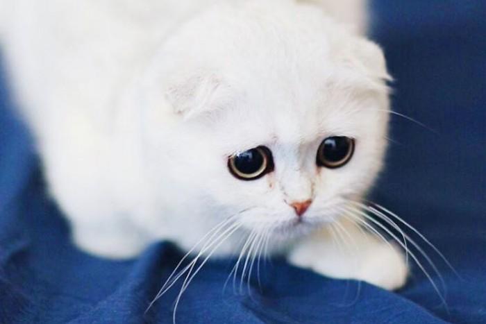 золота картинка с грустными глазами котенка такой наклонности кроется