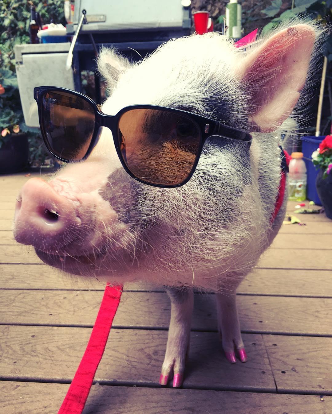 профлист картинки свинок в очках мне кажется, что