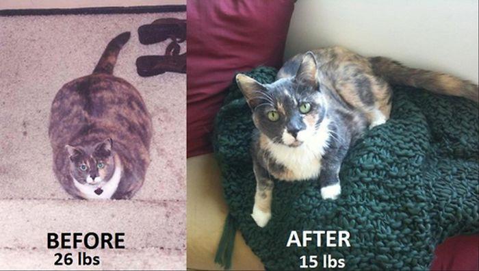 Как можно коту похудеть