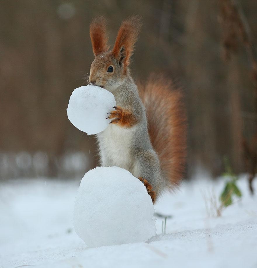 Животные в картинках зима